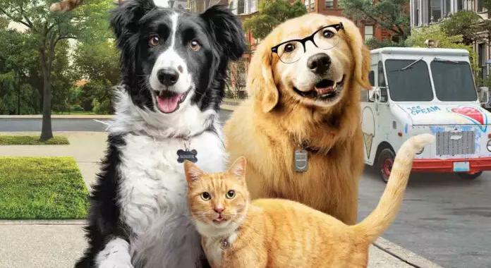 Franquia de Como Cães e Gatos cresce com terceiro filme que promete agradar público infantil, adultos e famílias